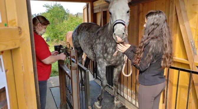 Pferdewiegen in Kornbach